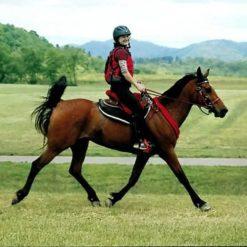 Endurance Saddle Pads