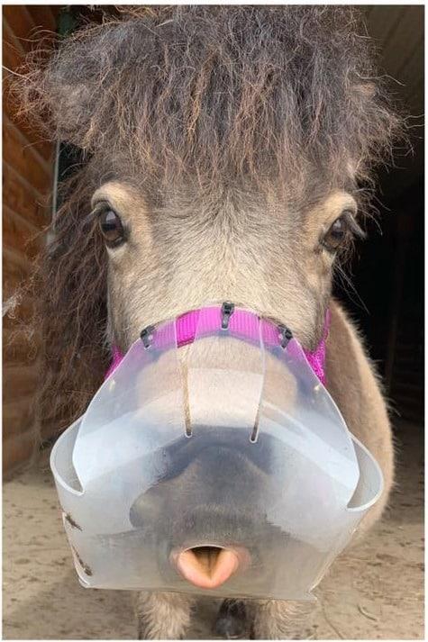 A Horse Name Pilot Flexible Filly Muzzle